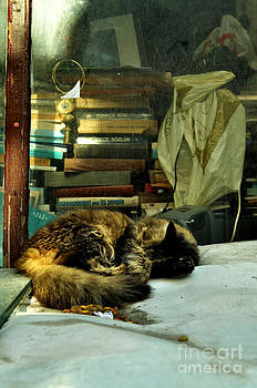 The Cat by Bener Kavukcuoglu