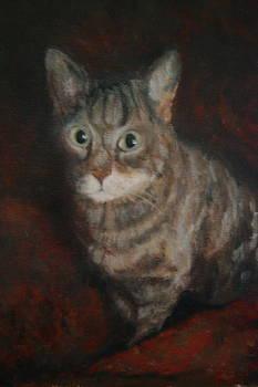 The Cat's Eyes by Joan Glinert