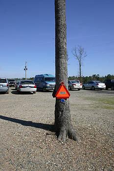 Nina Fosdick - The Caution Tree