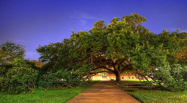 David Morefield - The Century Tree