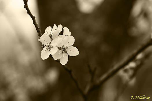 The Cherry Blossom by Anna McElhany