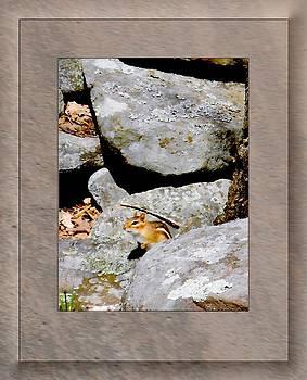 The Chipmunk by Patricia Keller