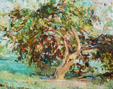 The Climbing Tree by Azhir Fine Art