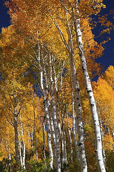 The Color Of Fall by Gene Praag