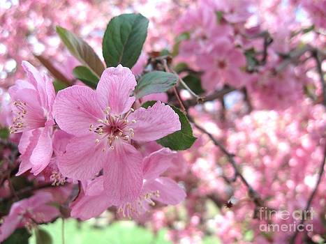 The Color of Spring by Crissy Boss