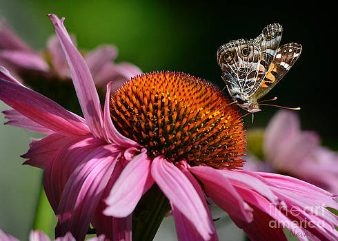 The Color of Summer by Nava Thompson