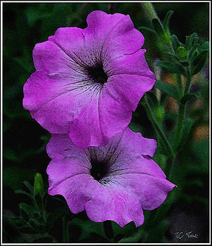 The Color Purple   by James C Thomas