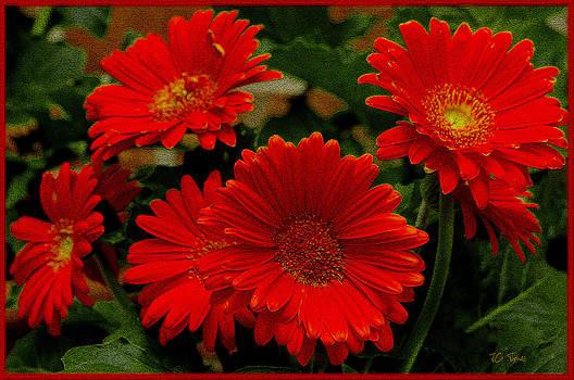 Gerbera Daisies Red by James C Thomas