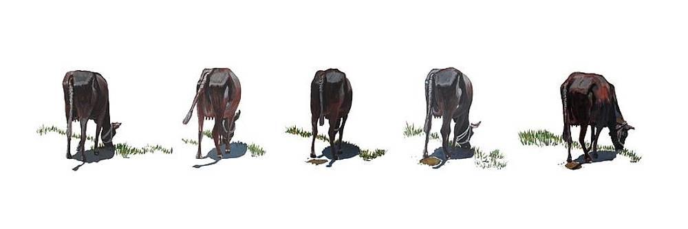 Usha Shantharam - The Cows