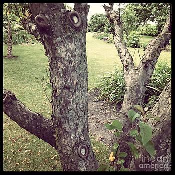 The Crabapple Tree by Garren Zanker