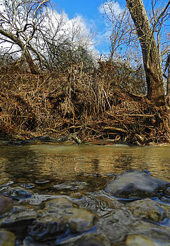 The Creek by Mamie Thornbrue