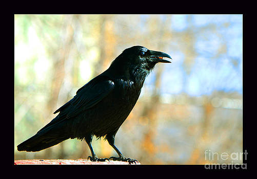 The Crow and the Kernal by Susanne Still