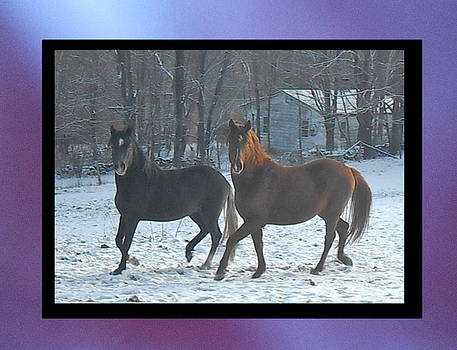 The Dancing Paso Fino Stallions by Patricia Keller