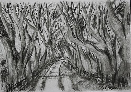 Paul Morgan - The Dark Hedges