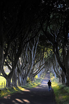 The Dark Hedges by Sharon Sefton