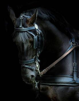 The dark horse by Alan Mattison