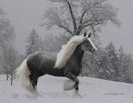 The Deep Snow by Terry Kirkland Cook