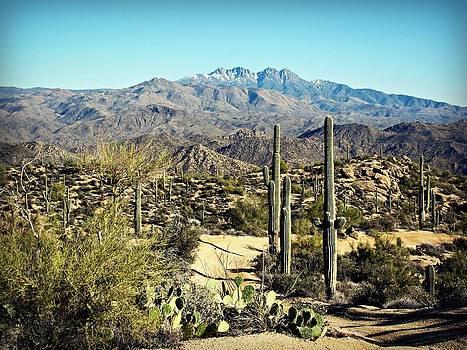 The Desert by Emily Fidler