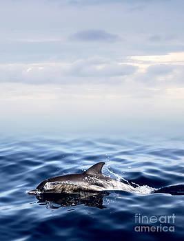 The dolphin  by Nantaporn Tatsri