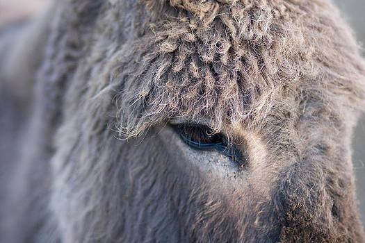 The Donkey by Jesska Hoff