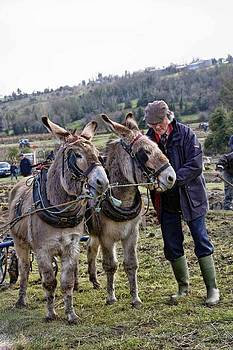 The Donkey Whisperer by Julie Williams