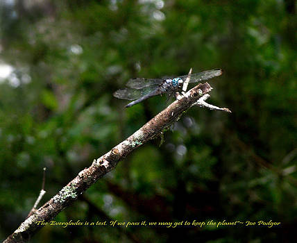 The Dragon Flies by Judy Paleologos