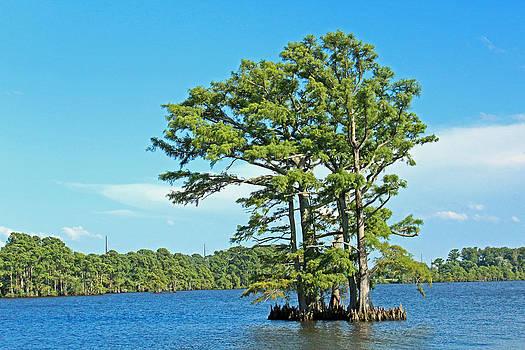 The Dram Tree by Carolyn Ricks