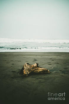 The Driftwood by Hardi Saputra