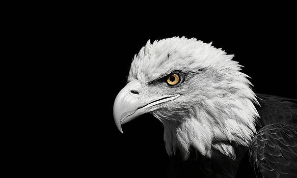 The Eagle by Erin Tucker