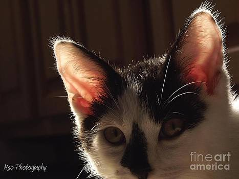 The Ear of the Kitten by Maideline  Sanchez