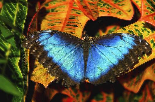 Saija  Lehtonen - The Electric Blue Morpho Butterfly