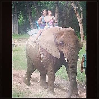 The Elephant Ride! I Was So Excited To by Justme MsB