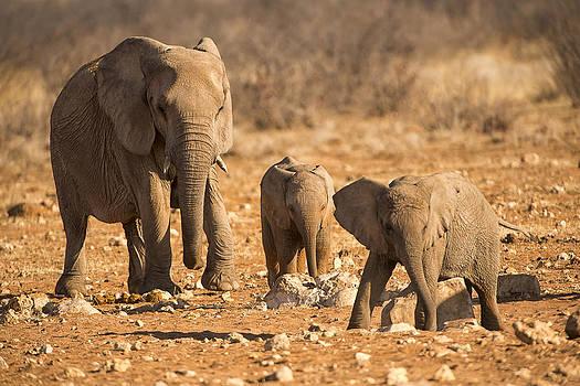 Paul W Sharpe Aka Wizard of Wonders - The Elephants Itching Rock