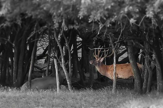 The Elk by Garett Gabriel