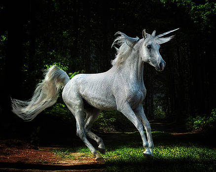 The Elusive Unicorn  by Katie Abrams
