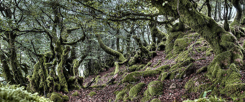 Weston Westmoreland - The Elven forest No2