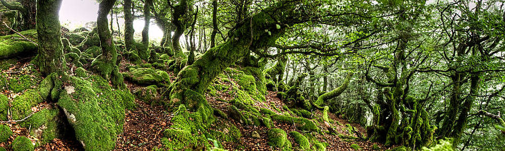 Weston Westmoreland - The Elven forest No2 Wide