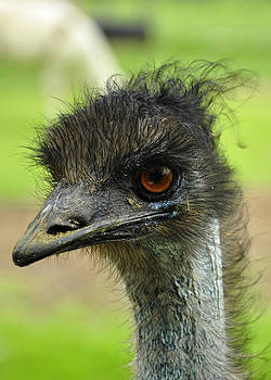 The Emu by Cherie Haines