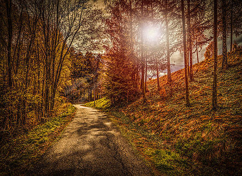 The Enchanted Forest by IP Maesstro