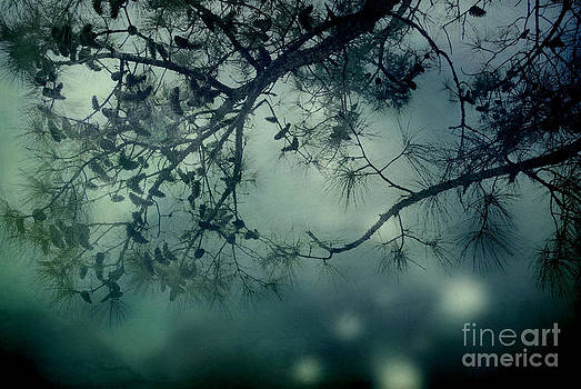 The Enchanted Forest by Sharon Coty
