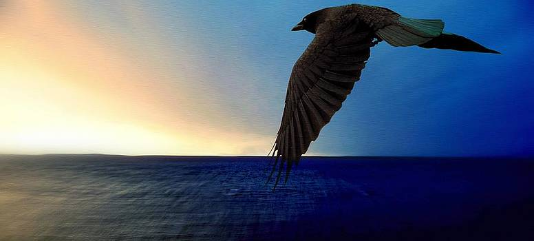 Marysue Ryan - The Escape crow raven bird flying into sunset water lake ocean