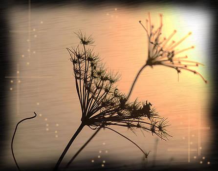 The Evening Light by Andrew Sliwinski
