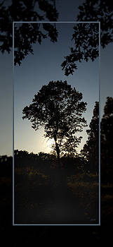 The Evening Tree by James Blackwell JR