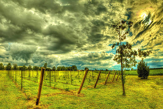 The Exotic Vineyard by  Caleb McGinn