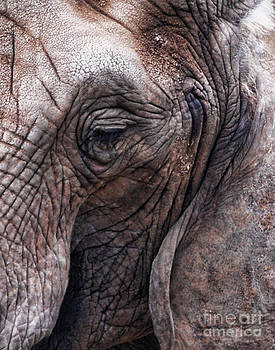 The Eye of the Elephant by Norma Rowley