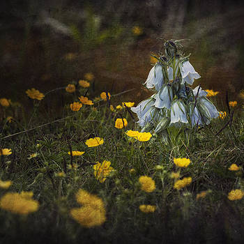 The Fairy by Toma Bonciu