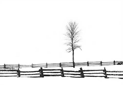 Andrea Kollo - The Farm