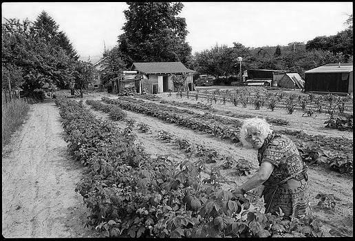 The Farm by David Riccardi