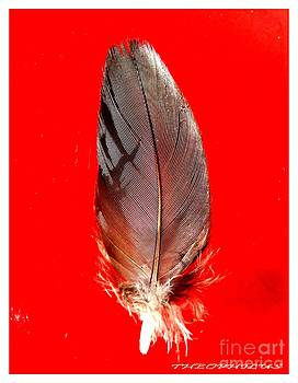 The Feather by Theo Bethel