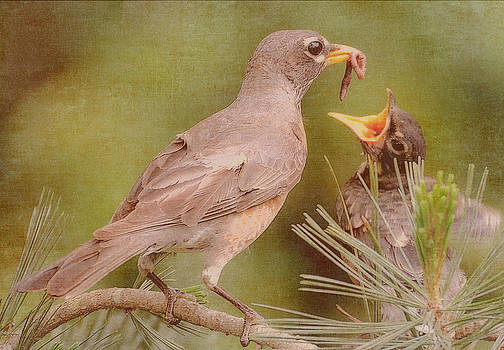 The Feeding by Michelle Ayn Potter